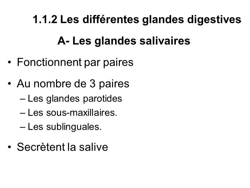 1.1.2 Les différentes glandes digestives A- Les glandes salivaires Fonctionnent par paires Au nombre de 3 paires –Les glandes parotides –Les sous-maxi