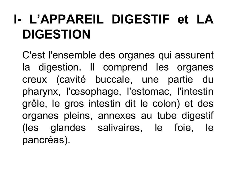I- LAPPAREIL DIGESTIF et LA DIGESTION C'est l'ensemble des organes qui assurent la digestion. Il comprend les organes creux (cavité buccale, une parti