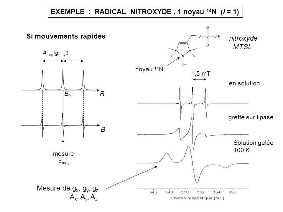 EXEMPLE : RADICAL NITROXYDE, 1 noyau 14 N (I = 1) nitroxyde MTSL en solution greffé sur lipase Solution gelée 100 K B B A moy /g moy B0B0 mesure g moy