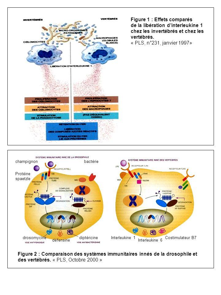 Figure 1 : Effets comparés de la libération dinterleukine 1 chez les invertébrés et chez les vertébrés. « PLS, n°231, janvier 1997» Figure 2 : Compara
