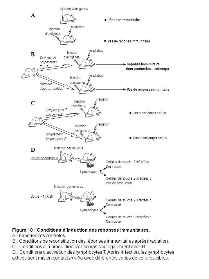 A C D B Injection dantigènes Réponse immunitaire Pas de réponse immunitaire Injection dantigènes irradiation Pas de réponse immunitaire Injection dant