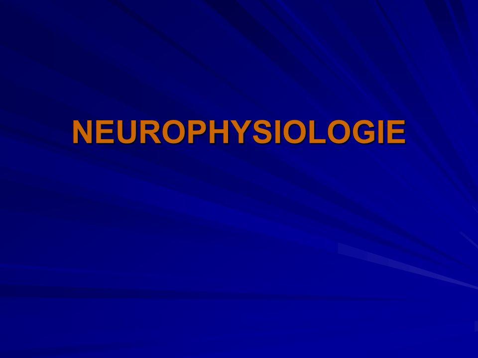 En périphérie Pas de détecteurs de la douleur individualisés Terminaisons nerveuses périphériques Fibres nerfs tronc nerveux Corne postérieure de la moelle
