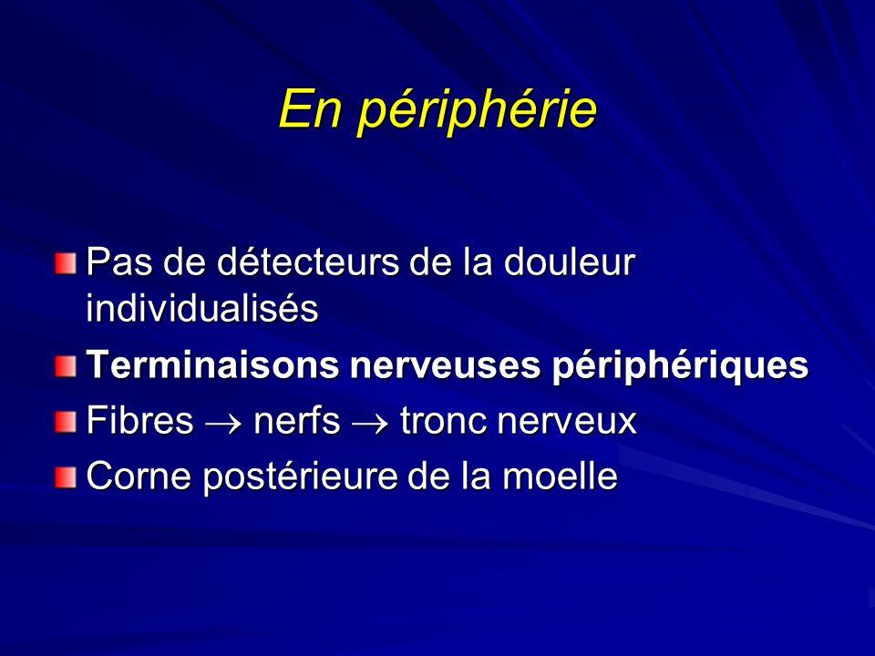En périphérie Pas de détecteurs de la douleur individualisés Terminaisons nerveuses périphériques Fibres nerfs tronc nerveux Corne postérieure de la m