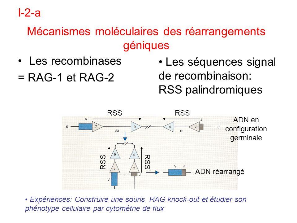 Les recombinases = RAG-1 et RAG-2 Expériences: Construire une souris RAG knock-out et étudier son phénotype cellulaire par cytométrie de flux Les séqu