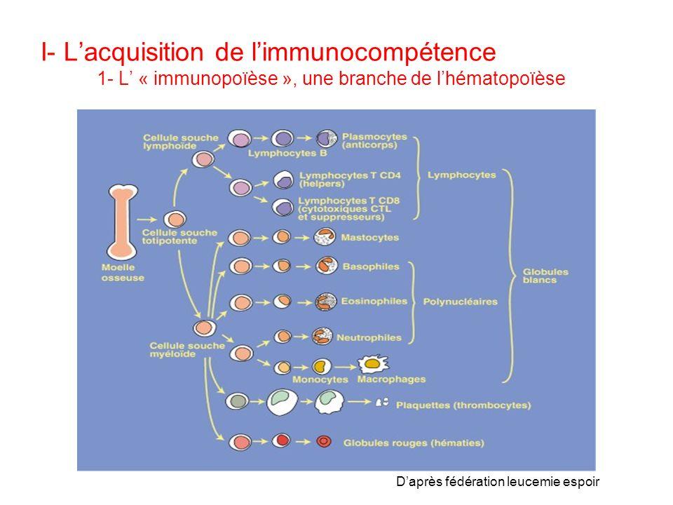 I- Lacquisition de limmunocompétence 1- L « immunopoïèse », une branche de lhématopoïèse Daprès fédération leucemie espoir