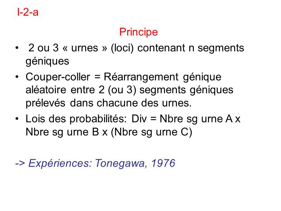 Principe 2 ou 3 « urnes » (loci) contenant n segments géniques Couper-coller = Réarrangement génique aléatoire entre 2 (ou 3) segments géniques prélev