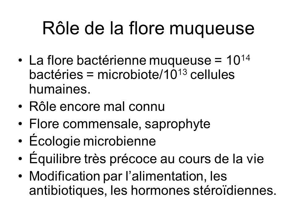 Rôle de la flore muqueuse La flore bactérienne muqueuse = 10 14 bactéries = microbiote/10 13 cellules humaines. Rôle encore mal connu Flore commensale