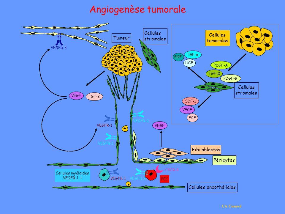 CA Cuenod Cellules stromales VEGF SDF-1 FGF HGF TGF- EGF TGF- PDGF-B PDGF-A Cellules tumorales Angiogenèse tumorale VEGF FGF-2 VEGF Fibroblastes Péric