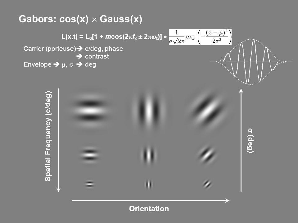 Gabors: cos(x) Gauss(x) Spatial Frequency (c/deg) Orientation Carrier (porteuse) c/deg, phase contrast Envelope, deg (deg) L(x,t) = L 0 [1 + mcos(2 f