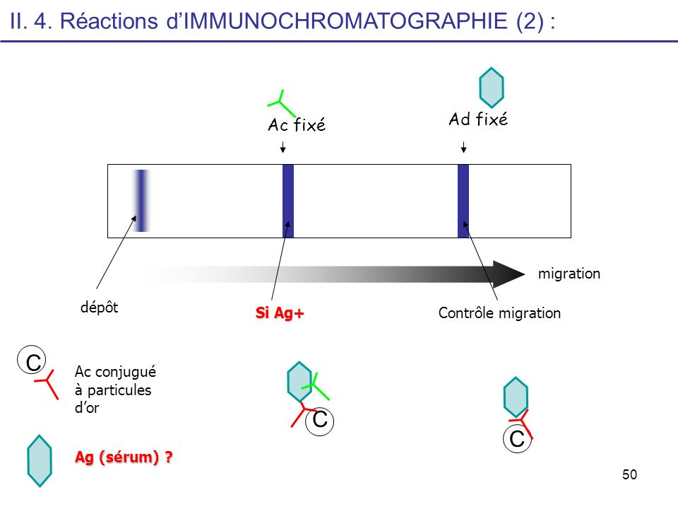 50 migration dépôt Contrôle migration Si Ag+ C C Ac conjugué à particules dor Ag (sérum) ? C Ac fixé Ad fixé II. 4. Réactions dIMMUNOCHROMATOGRAPHIE (