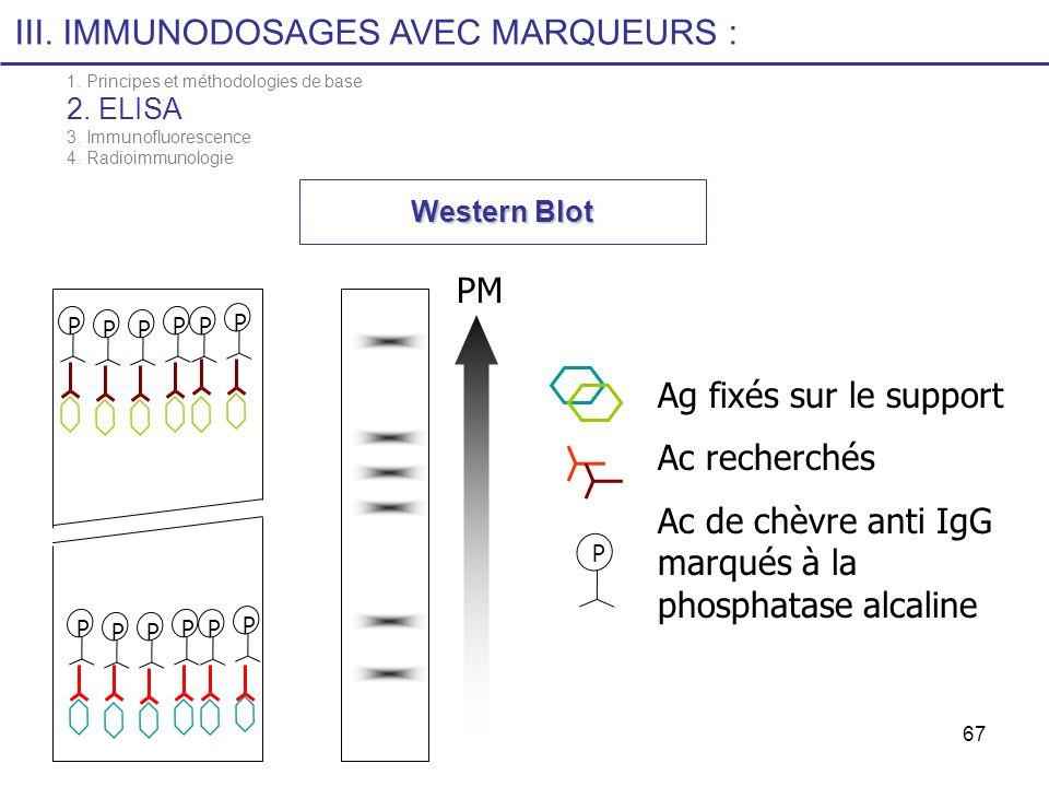 67 Western Blot Ag fixés sur le support Ac recherchés Ac de chèvre anti IgG marqués à la phosphatase alcaline P PM P PPPPPPPPPPP III. IMMUNODOSAGES AV