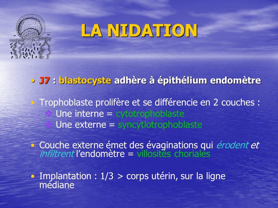LA NIDATION J7 : blastocyste adhère à épithélium endomètreJ7 : blastocyste adhère à épithélium endomètre Trophoblaste prolifère et se différencie en 2