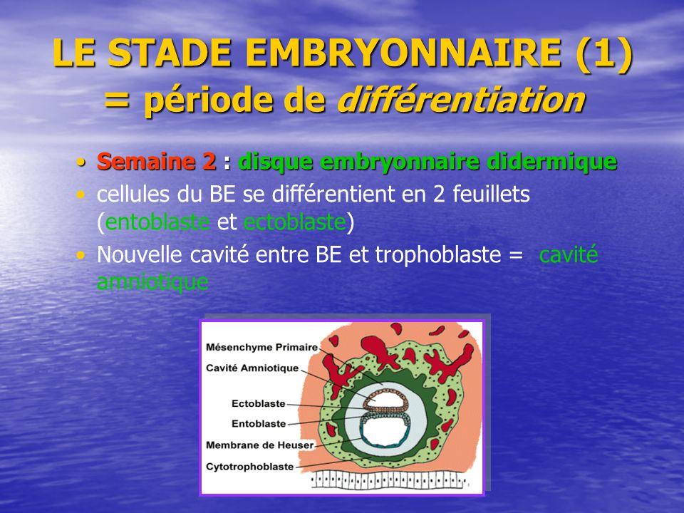 LE STADE EMBRYONNAIRE (1) = période de différentiation Semaine 2 : disque embryonnaire didermiqueSemaine 2 : disque embryonnaire didermique cellules d