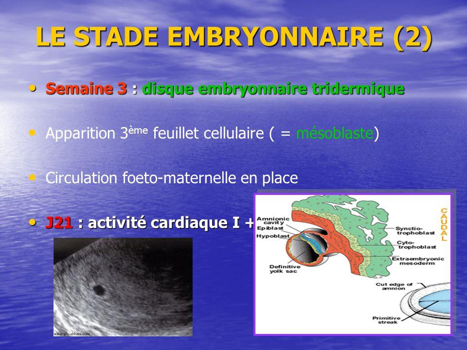 LE STADE EMBRYONNAIRE (2) Semaine 3 : disque embryonnaire tridermique Apparition 3 ème feuillet cellulaire ( = mésoblaste) Circulation foeto-maternell