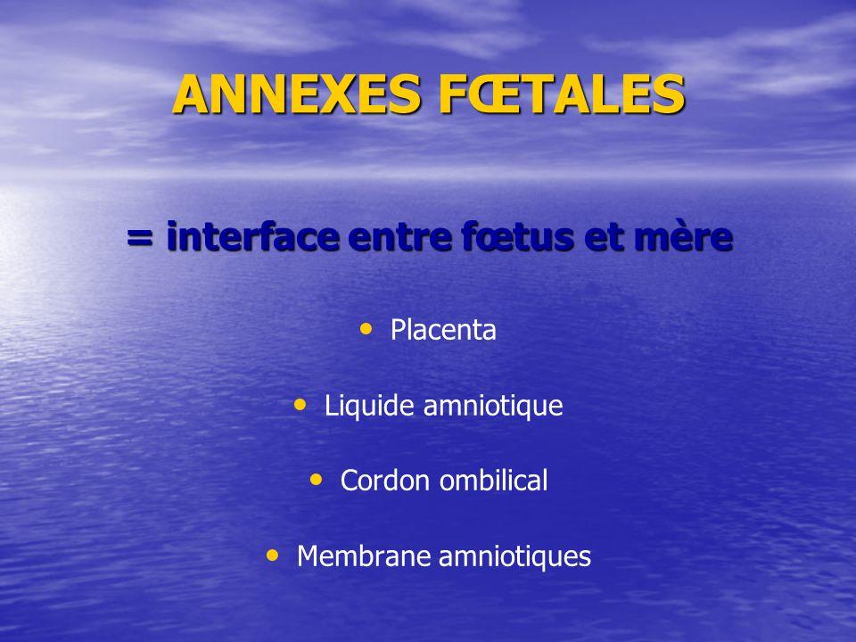 ANNEXES FŒTALES = interface entre fœtus et mère Placenta Liquide amniotique Cordon ombilical Membrane amniotiques