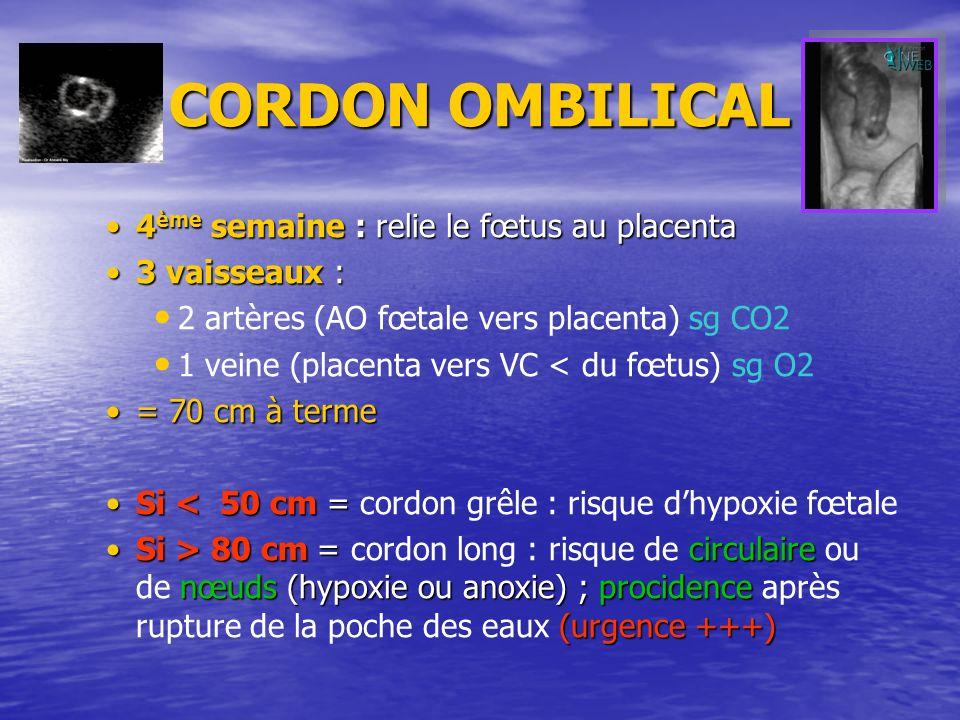 CORDON OMBILICAL 4 ème semaine : relie le fœtus au placenta4 ème semaine : relie le fœtus au placenta 3 vaisseaux :3 vaisseaux : 2 artères (AO fœtale