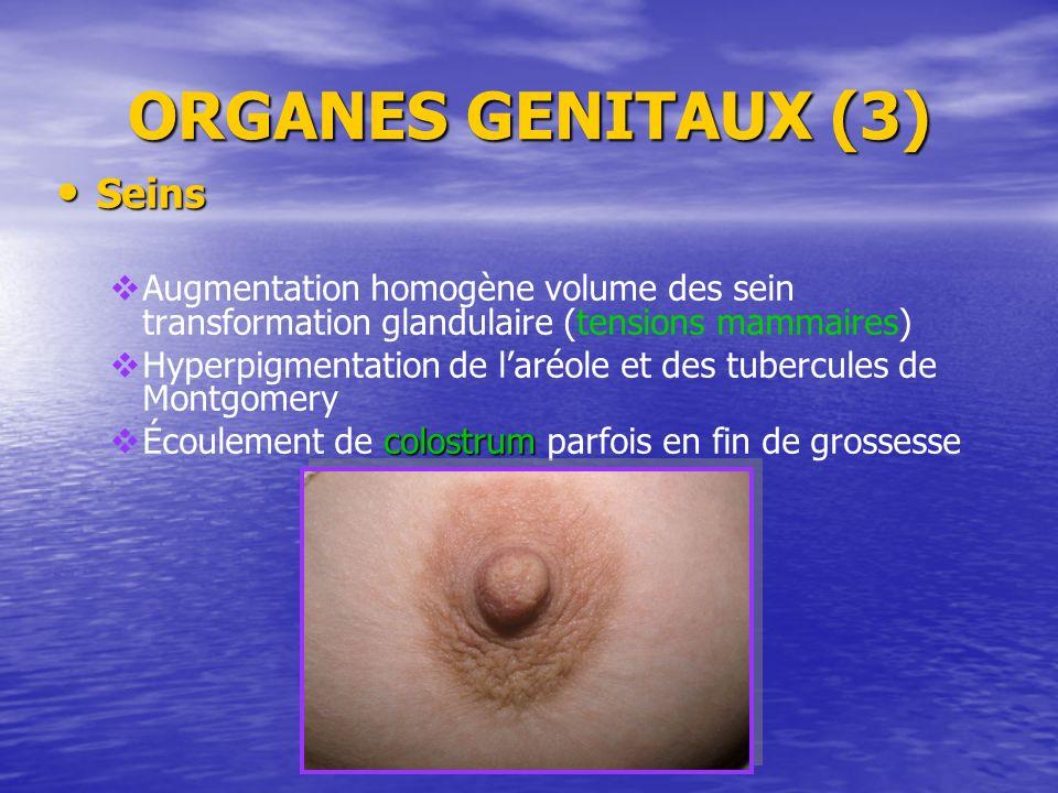 ORGANES GENITAUX (3) Seins Seins Augmentation homogène volume des sein transformation glandulaire (tensions mammaires) Hyperpigmentation de laréole et