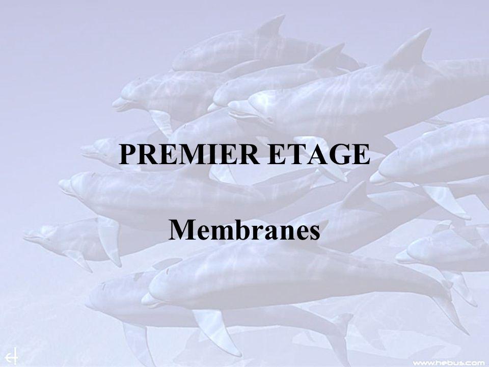 PREMIER ETAGE Membranes