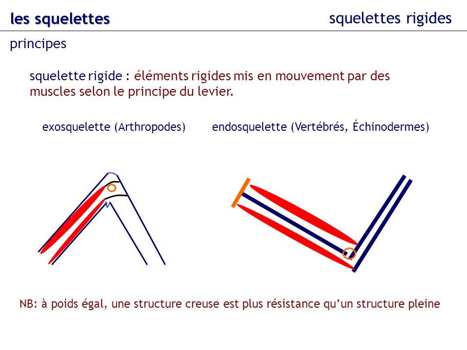 squelettes rigides les squelettes principes squelette rigide : éléments rigides mis en mouvement par des muscles selon le principe du levier. NB: à po