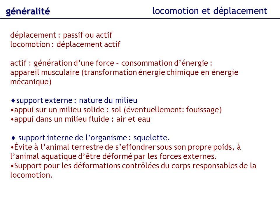 appareils locomoteurs latéraux support solide modifications adaptatives exemples : saut grenouille (Rana esculenta) Criquet (Locusta migratoria) ressort à lames : convergence adaptative (homoplasie)