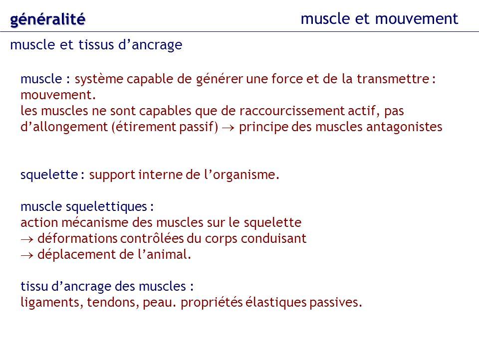 muscle et mouvement généralité muscle et tissus dancrage tissu dancrage : propriétés élastiques passives.