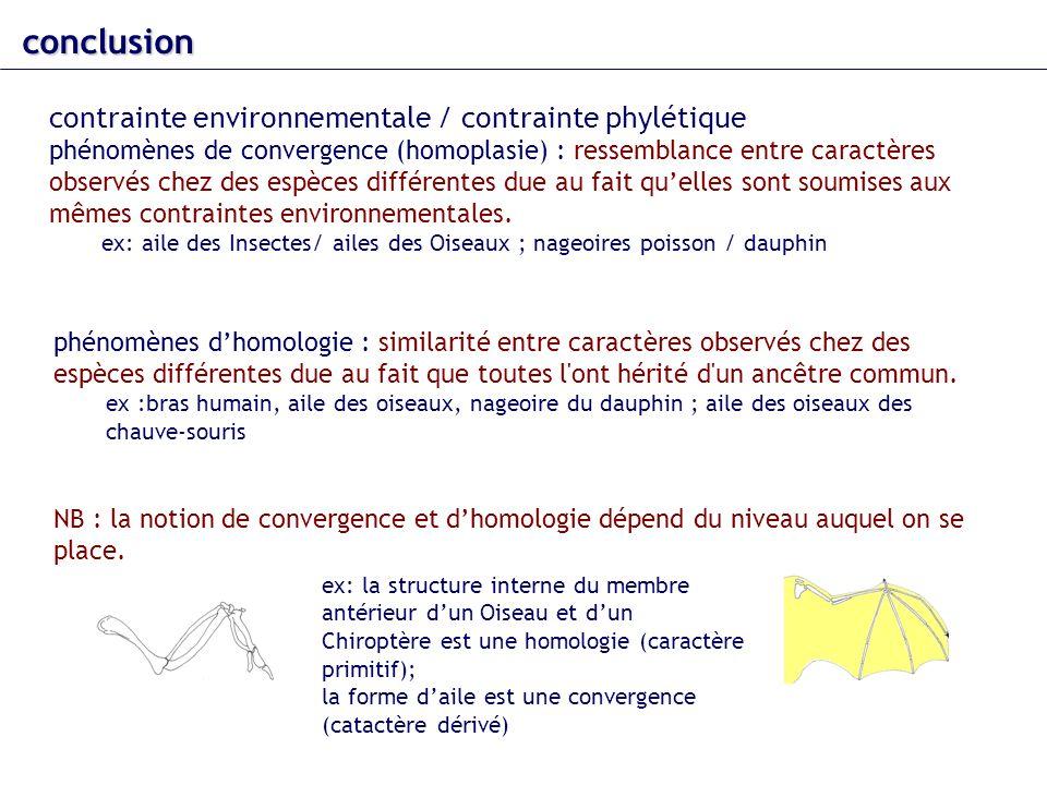 conclusion contrainte environnementale / contrainte phylétique phénomènes de convergence (homoplasie) : ressemblance entre caractères observés chez de