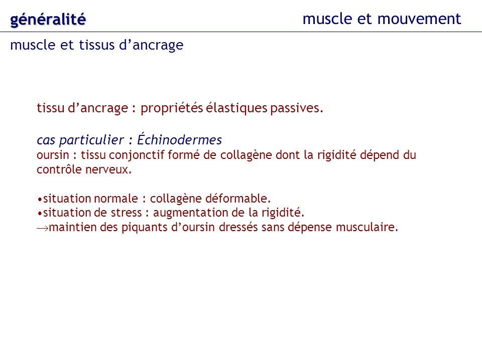 muscle et mouvement généralité muscle et tissus dancrage tissu dancrage : propriétés élastiques passives. cas particulier : Échinodermes oursin : tiss