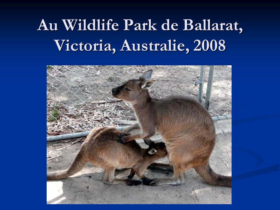 Au Wildlife Park de Ballarat, Victoria, Australie, 2008