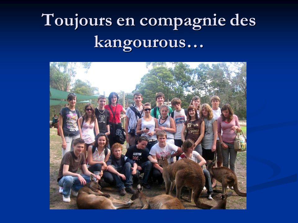 Toujours en compagnie des kangourous…