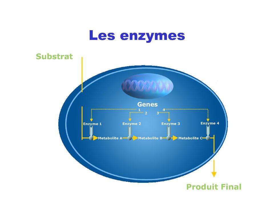 Des enzymes dans la lessive 1913 - premier brevet pour une lessive aux enzymes 1950 - première protéase industrielle pour la lessive (Novo Nordisk) 1968 - les « enzymes gloutons » 1988 - Lipolase première enzyme OGM pour la lessive Aujourdhui 90 % des lessives contiennent des enzymes
