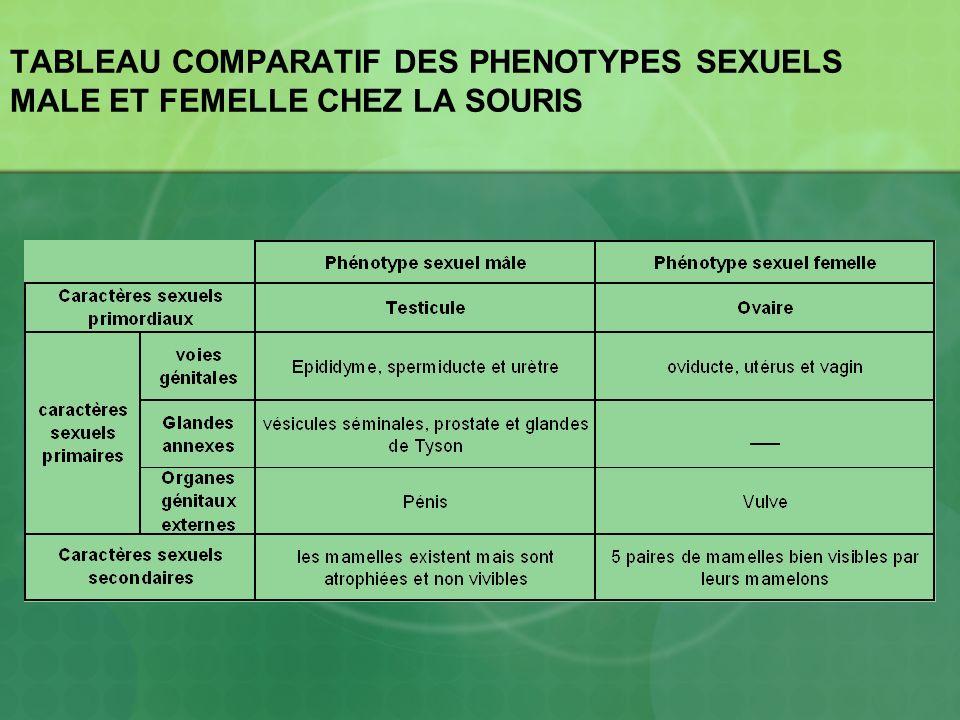 TABLEAU COMPARATIF DES PHENOTYPES SEXUELS MALE ET FEMELLE CHEZ LA SOURIS