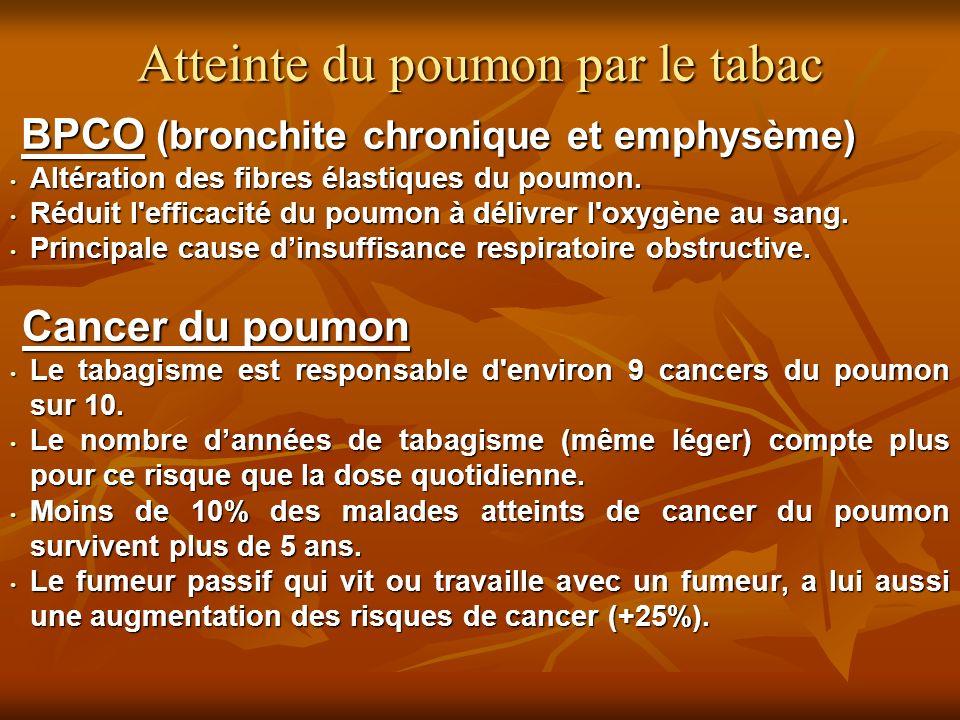 BPCO (bronchite chronique et emphysème) BPCO (bronchite chronique et emphysème) Altération des fibres élastiques du poumon. Altération des fibres élas