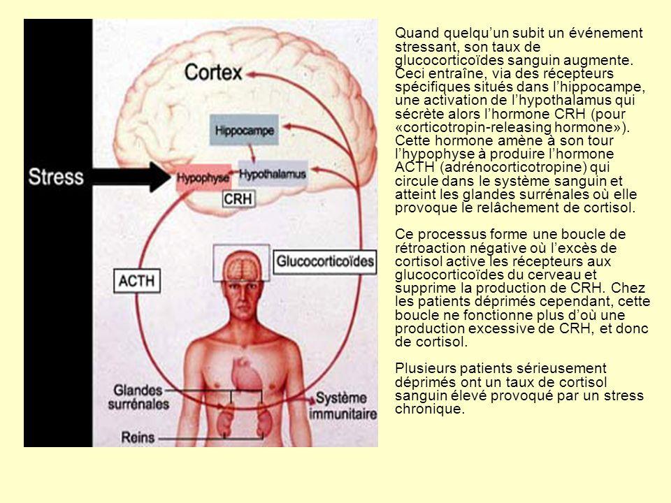 Quand quelquun subit un événement stressant, son taux de glucocorticoïdes sanguin augmente. Ceci entraîne, via des récepteurs spécifiques situés dans