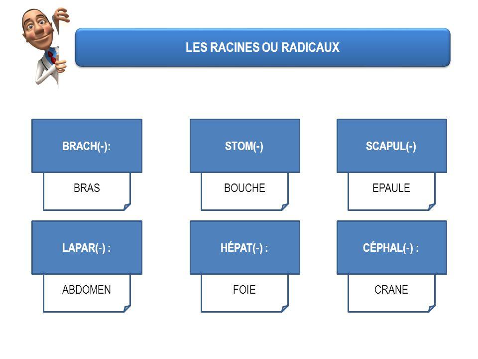 BRACH(-): BRAS STOM(-) BOUCHE SCAPUL(-) EPAULE LAPAR(-) : ABDOMEN HÉPAT(-) : FOIE CÉPHAL(-) : CRANE LES RACINES OU RADICAUX