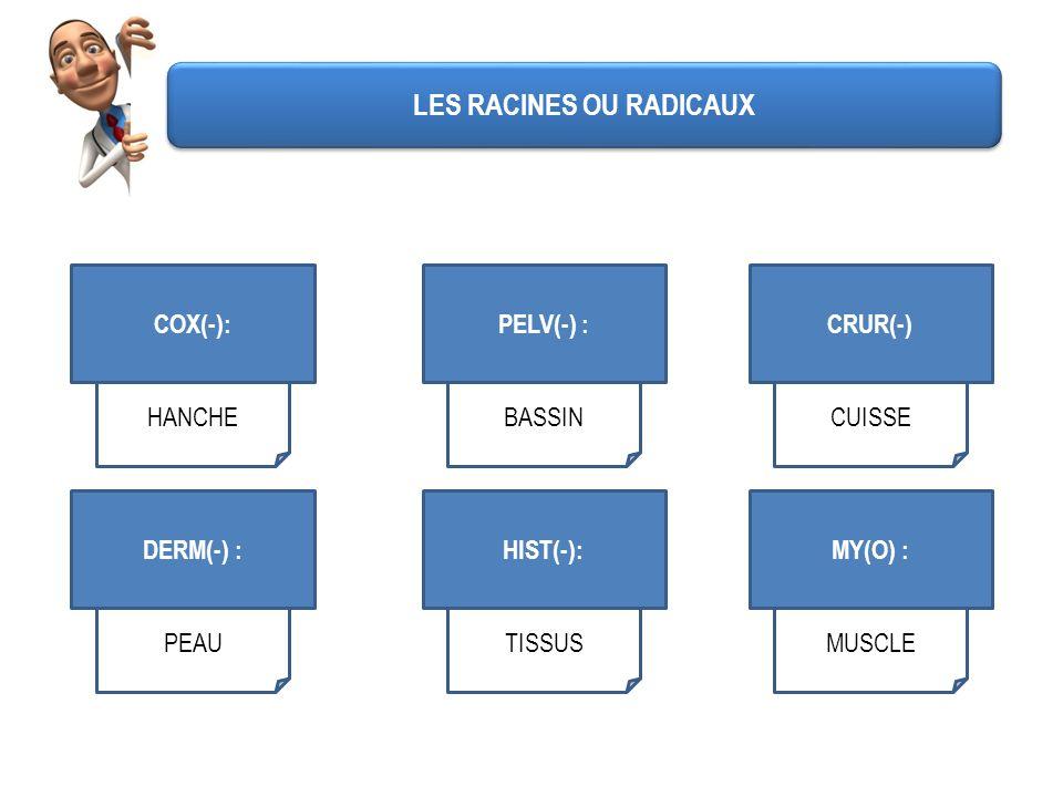 COX(-): HANCHE PELV(-) : BASSIN CRUR(-) CUISSE DERM(-) : PEAU HIST(-): TISSUS MY(O) : MUSCLE LES RACINES OU RADICAUX