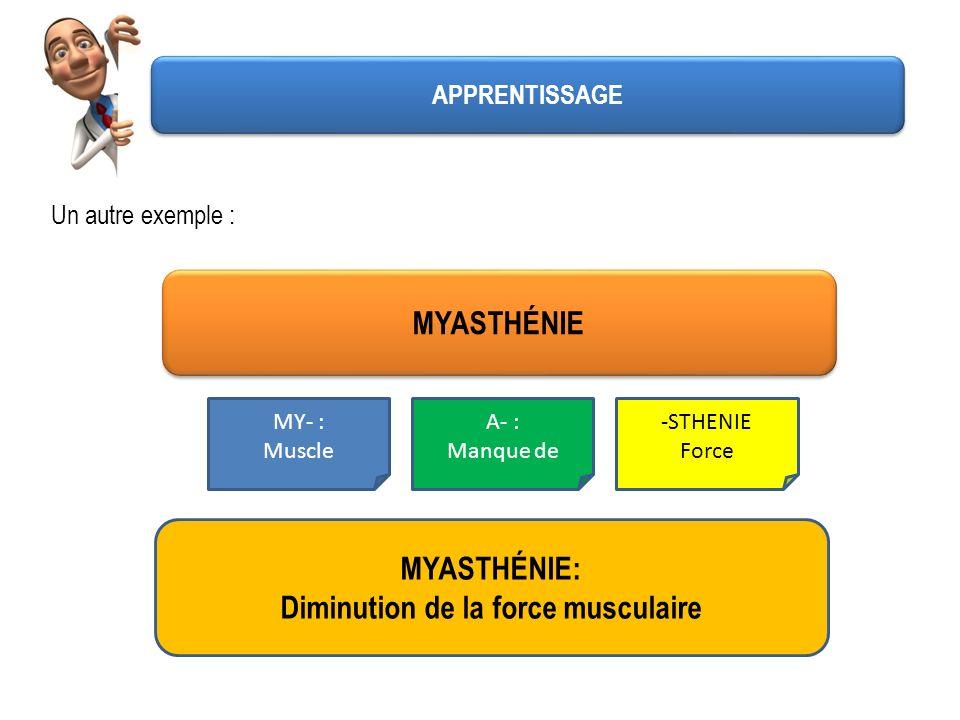 Un autre exemple : MYASTHÉNIE MY- : Muscle A- : Manque de -STHENIE Force MYASTHÉNIE: Diminution de la force musculaire APPRENTISSAGE