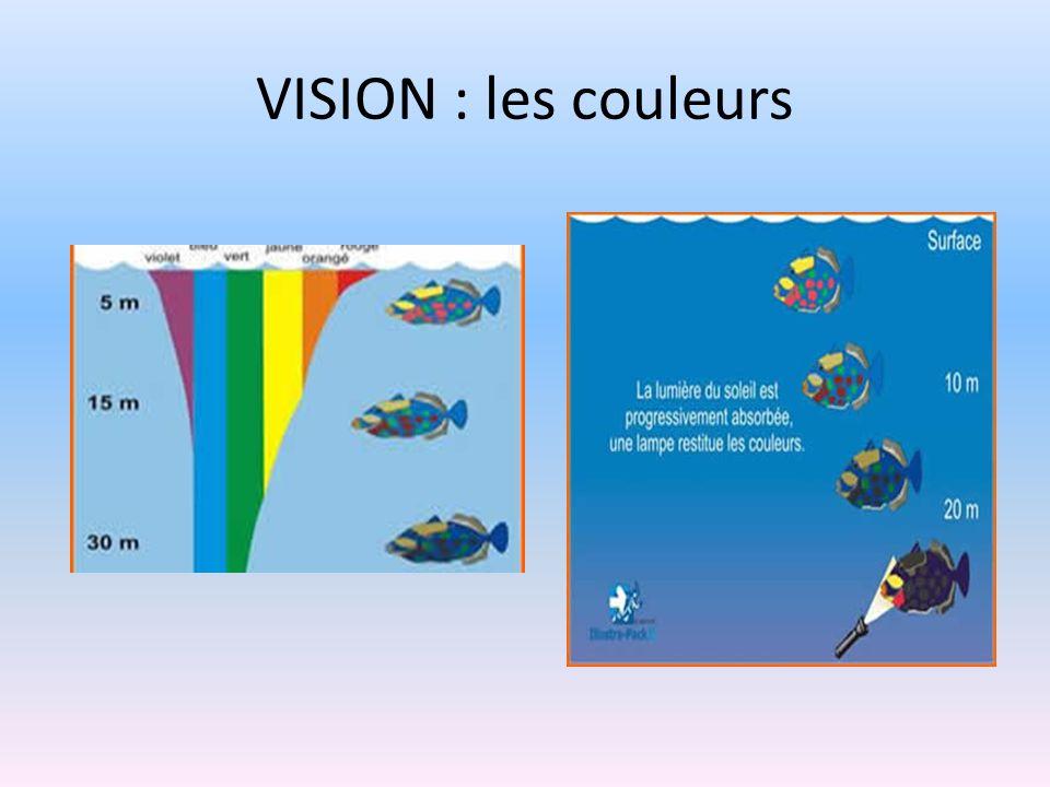 VISION : les couleurs