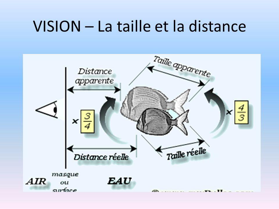 VISION – La taille et la distance