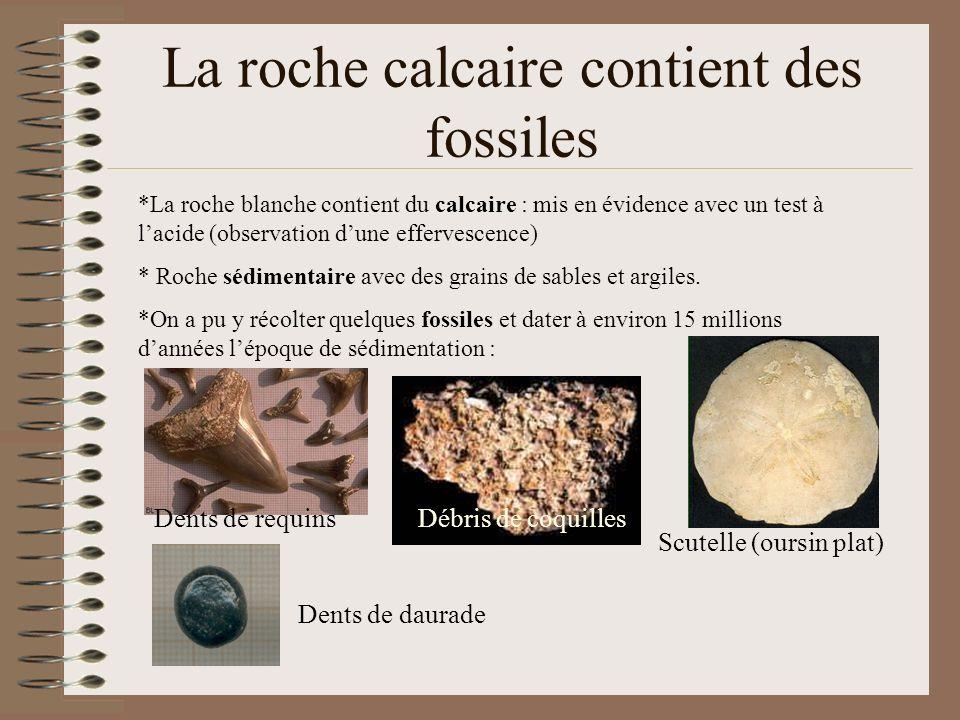 La roche calcaire contient des fossiles *La roche blanche contient du calcaire : mis en évidence avec un test à lacide (observation dune effervescence