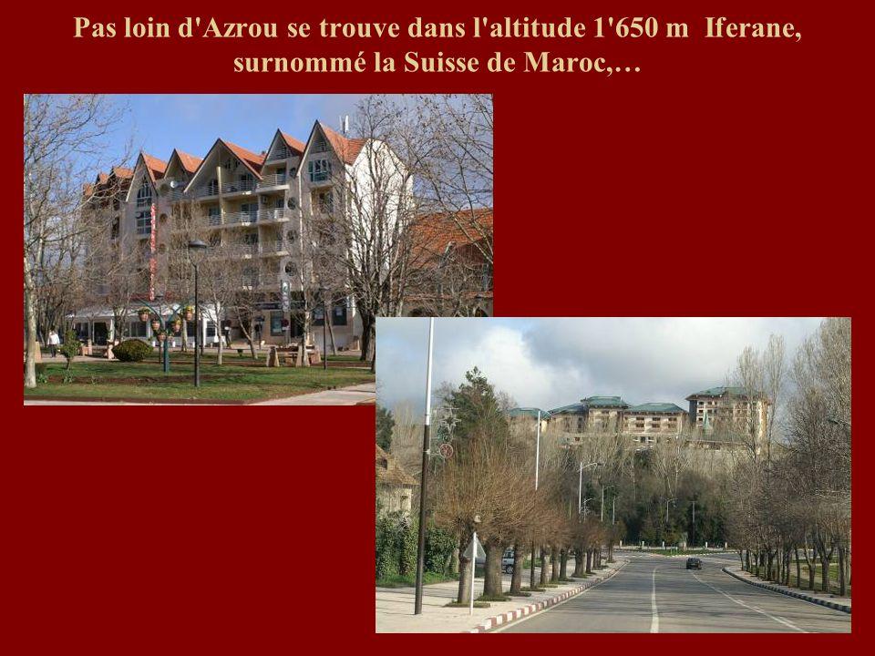 Pas loin d'Azrou se trouve dans l'altitude 1'650 m Iferane, surnommé la Suisse de Maroc,…