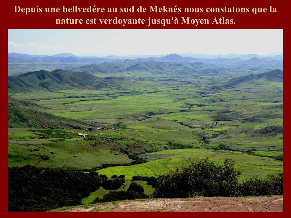 Depuis une bellvedére au sud de Meknés nous constatons que la nature est verdoyante jusqu'à Moyen Atlas.