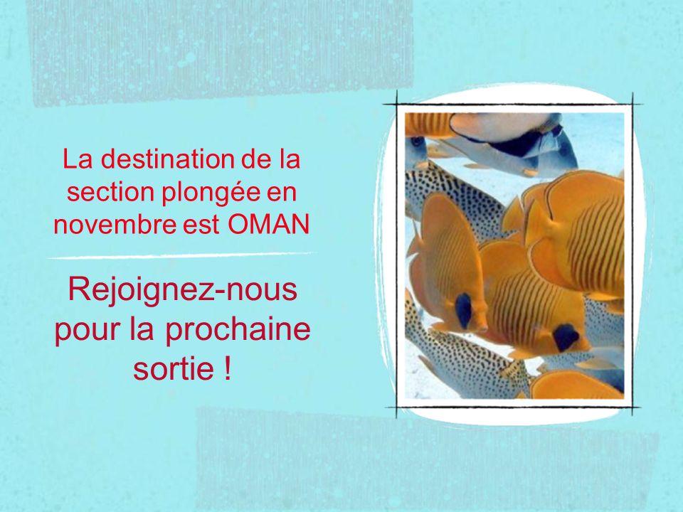 La destination de la section plongée en novembre est OMAN Rejoignez-nous pour la prochaine sortie !