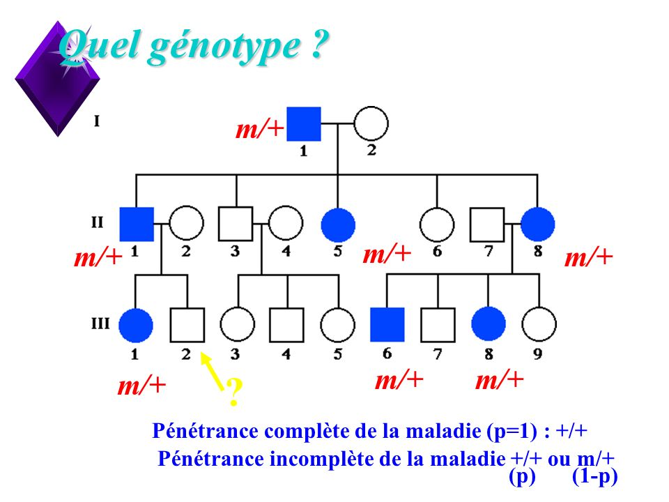 10 Quel génotype ? m/+ ? Pénétrance complète de la maladie (p=1) : +/+ Pénétrance incomplète de la maladie +/+ ou m/+ (p)(1-p)