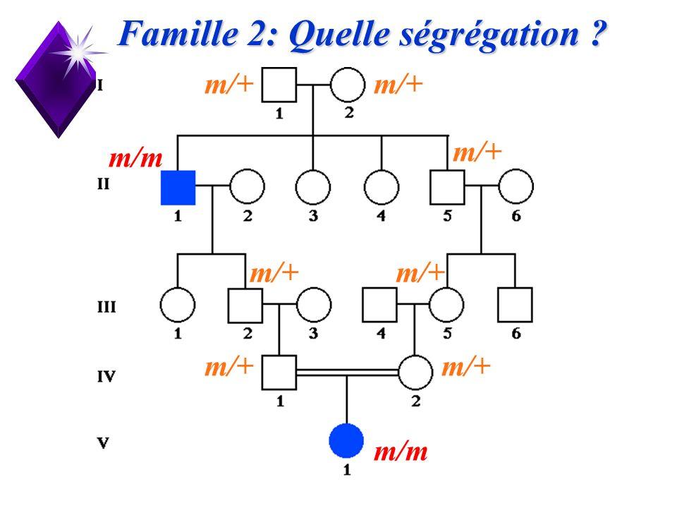 18 Famille 2: Quelle ségrégation ? m/m m/+