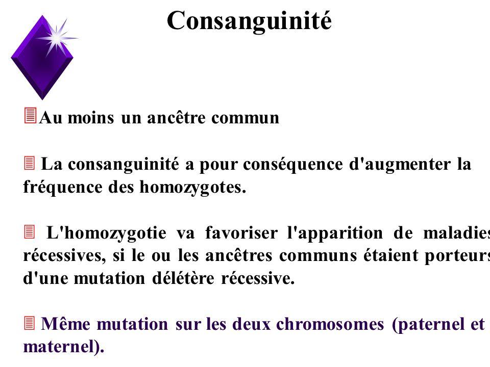 19 Au moins un ancêtre commun La consanguinité a pour conséquence d'augmenter la fréquence des homozygotes. L'homozygotie va favoriser l'apparition de