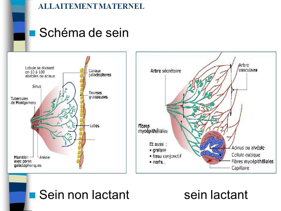 ALLAITEMENT MATERNEL LE SEIN : organe de la lactation glande mammaire = glande exocrine tubulo-alvéolaire secrétant et excrétant le lait Chaque glande