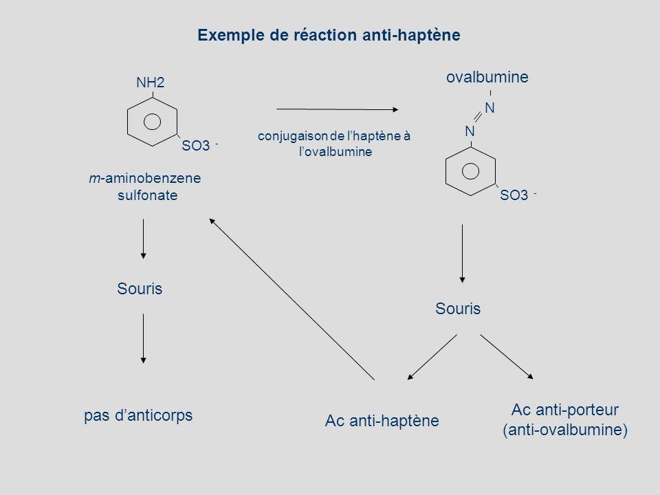 m-aminobenzene sulfonate SO3 - NH2 Souris pas danticorps SO3 - N N ovalbumine conjugaison de lhaptène à lovalbumine Ac anti-haptène Ac anti-porteur (a