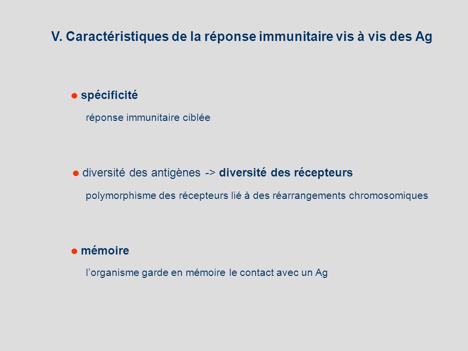 V. Caractéristiques de la réponse immunitaire vis à vis des Ag polymorphisme des récepteurs lié à des réarrangements chromosomiques diversité des anti