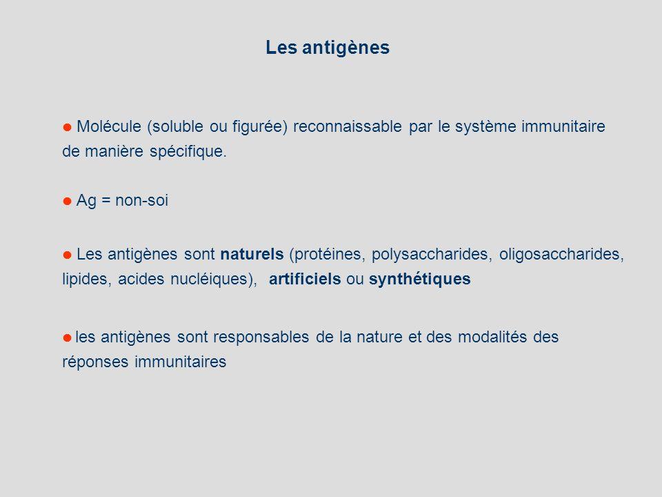 Les antigènes Molécule (soluble ou figurée) reconnaissable par le système immunitaire de manière spécifique. Ag = non-soi Les antigènes sont naturels