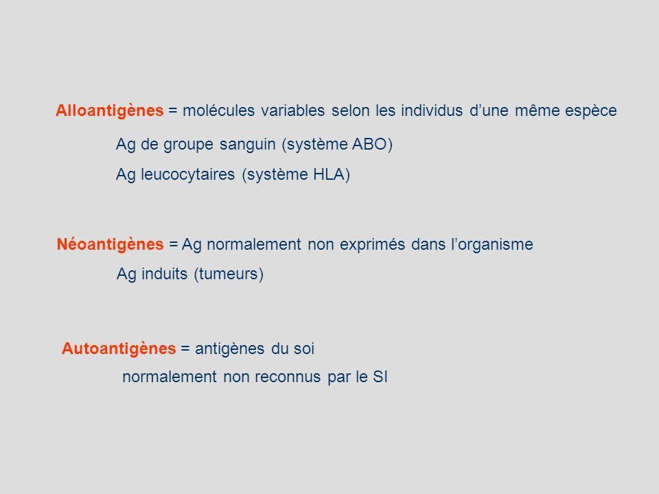 Alloantigènes = molécules variables selon les individus dune même espèce Ag de groupe sanguin (système ABO) Ag leucocytaires (système HLA) Autoantigèn